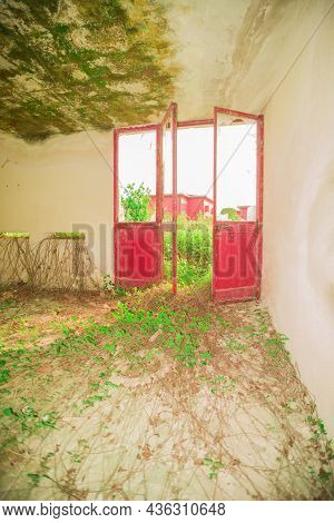 Room With A Red Door Of A Lost Place That Nature Is Reclaiming