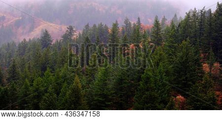 Fall autumn day in mountains with rainy mist maple and pine forest