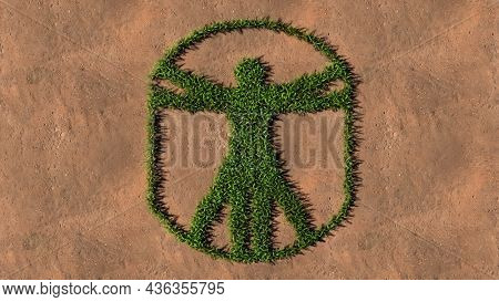 Concept conceptual green summer lawn grass symbol shape on brown soil or earth background, vitruvius man sign. A 3d illustration metaphor for architecture, renaissance, anthropology and physiology