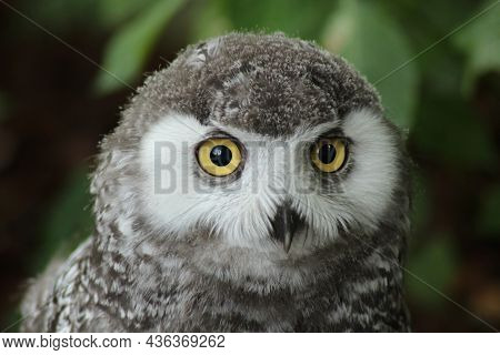 Birds Nature  Animals  In  The, Wild, Birds  Flyers  Of, Forests And  Meadows  Photos  Prey  Predato
