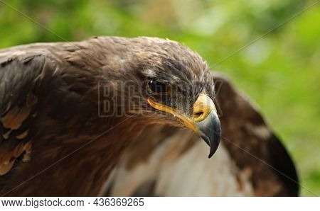 Birds  Nature  Animals, In, The, Wild, Birds, Flyers, Of, Forests, And, Meadows, Photos, Prey, Preda