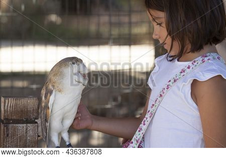 Child Girl Caress Wounded Barn Owl At Bird Rescue Center. Environmental Education For Children Conce