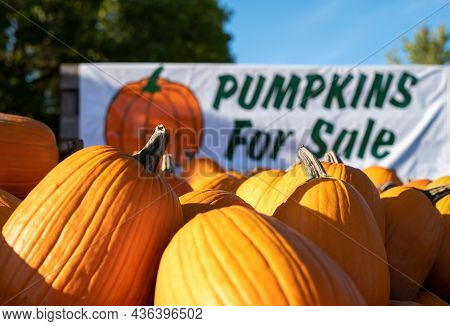 Closeup Of Pumpkins For Sale On A Trailer At A Roadside Farm, Being Sold Using The Honor System. Clo