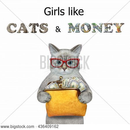 An Ash Cat Holds An Orange Leather Wallet With Dollars. Girls Like Cats And Money. White Background.