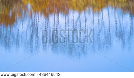 Abstract Blurry Colorful Background Of Stunning Reflection Of Many Leafless Trees And Bushes With Bl