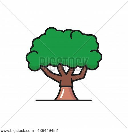Green Olive Tree With Broad Trunk And Green Crown Of Leaves Isolated Flat Line Icon. Vector Plantati