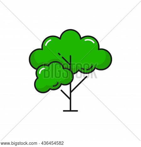 Tree With Branches And Green Leaves Isolated Thin Line Icon. Vector Wild Tree Outline Park Plant, Ga