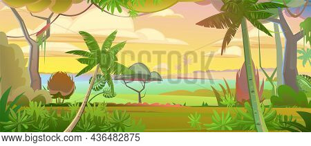 Jungle Vines. Dense Thickets. Morning Sunrise Dawn Or Evening Sunset. View From The Forest. Southern