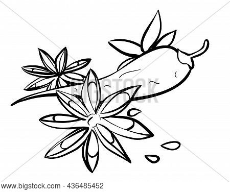 Anise Star And Chili Pepper Spices Linear Illustration. Flavoring, Seasoning. Contour Symbol. Vector