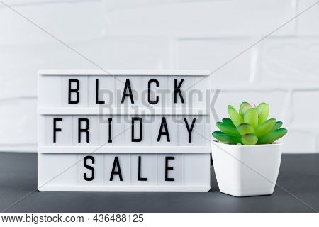 Black Friday Sale. Lightbox With Text And Green Plant On A White Background.