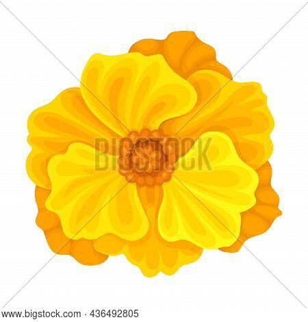 Bright Orange Flower With Showy Petals And Stamen Closeup Vector Illustration