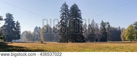 Large Glade In Park Overgrown With Grass, With Old Coniferous And Deciduous Trees On A Background, A