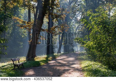 Footpath In Park With Bench Along The Old Trees And Shrubs Illuminated With Sun Beams In A Fog At Au