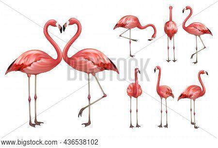 Pink Flamingo. Wildlife Exotic Birds Tropical Flamingo Decent Vector Realistic Poses Pictures Templa