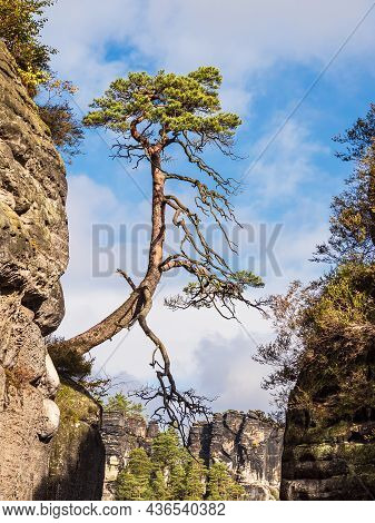 View To Rocks And Trees In The Saxon Sandstone Mountains, Germany.