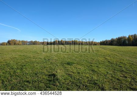Beautiful Countryside Landscape With Large Green Field And Deciduous Forest At Far Under White Cloud