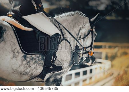 A Beautiful Dappled Gray Horse With A Rider In The Saddle Walks On A Sunny Day. Equestrian Sports An