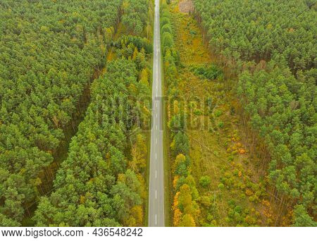 A Vast Plain Covered With Tall Pine Forests. You Can See A Straight Road In The Center Of The Frame.