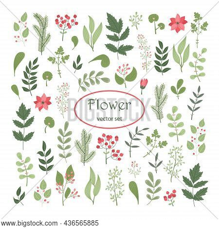 Vector Floral Set With Plants And Flowers