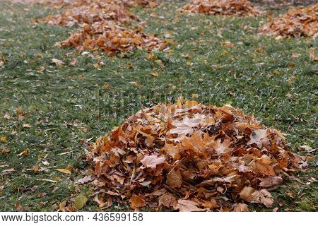 A Pile Of Fallen Dry Leaves On The Grass, Cleaning Autumn Foliage In Parks And On The Streets, Seaso