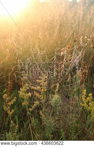 Summer Landscape With Field Of Grass And Cobwebs In Sun Light At Dawn