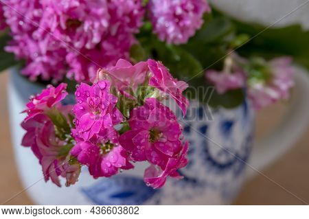 Water Drops On Flowers. Background With Wet Flowers. Pink Flowers. Background With Purple Flowers.
