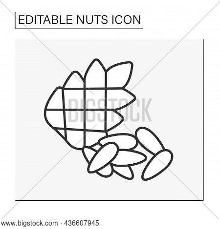 Pine Nuts Line Icon. Dried Out And Roasted Nuts. Snack, Or Added To Meat Dishes, Fish, Salads, And B