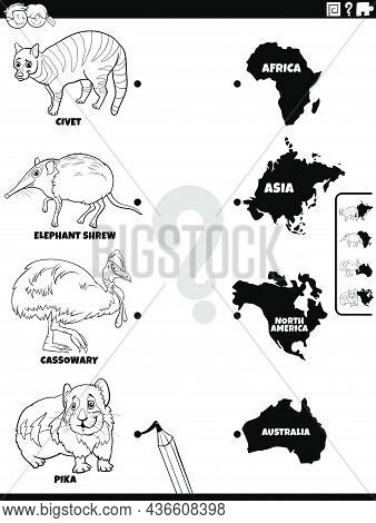Black And White Cartoon Illustration Of Educational Matching Task For Children With Animal Species C