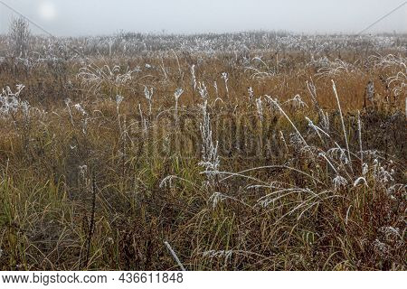 Foggy Frosty Morning In An Autumn Field With Dried Yellow Grasses