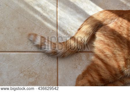 Ginger Cat Tail On The Floor. Tabby Cat Laying In The Sun At Home. Copy Space Is On The Left Side.