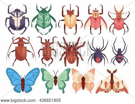 Vector Insect Set. Cute Bugs, Butterflies, Moths And Beetles. Hand Drawn Insects