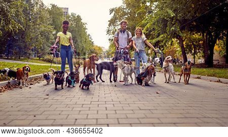 A bunch of dogs on the leash on the walk on a beautiful day in the park led by group of young dog walkers. Pets, walkers, service