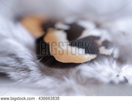 Nature Chicken Feather, Soft Focus Texture Fluffy Wings Of Hens In Pastel Colour, Beautiful Abstract