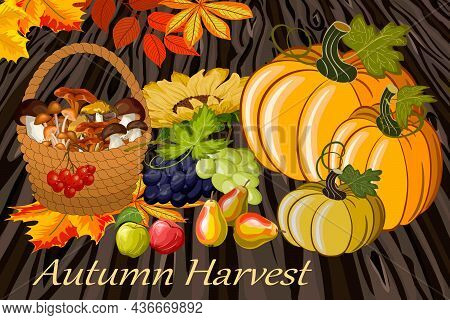 Colored Illustration With Autumn Harvest.pumpkins, Fruits, Grapes And A Basket With Mushrooms In A V