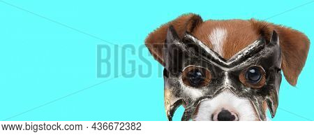landscape of a cute jack russell terrier dog wearing a mask against blue background
