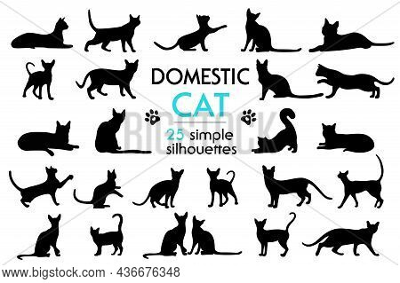 Big Set Of Vector Feline Silhouettes As Well. Silhouettes Of Cats In Different Poses. Cat Paw Prints
