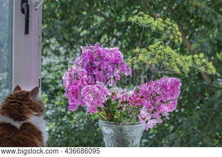 Bouquet Of Pink Phlox And Silhouette Of Cat On Sunny Morning