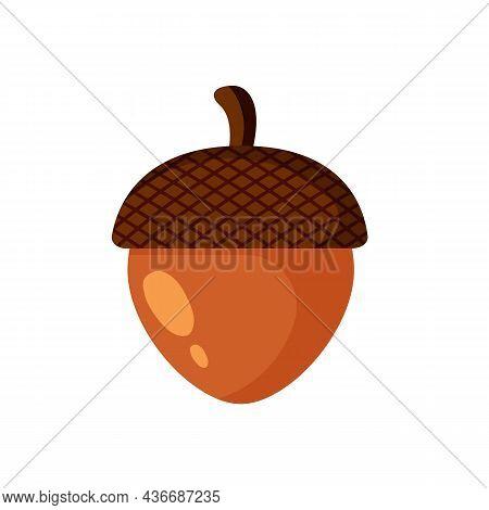 Acorn Isolated On White Background. Autumn Concept.  Acorn, Oak Nut, Seed. Vector Stock
