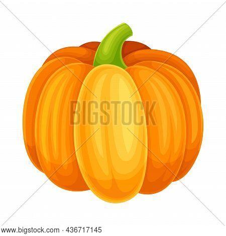 Ripe Orange Pumpkin Vegetable As Healthy Raw Food And Garden Cultivar Closeup Vector Illustration