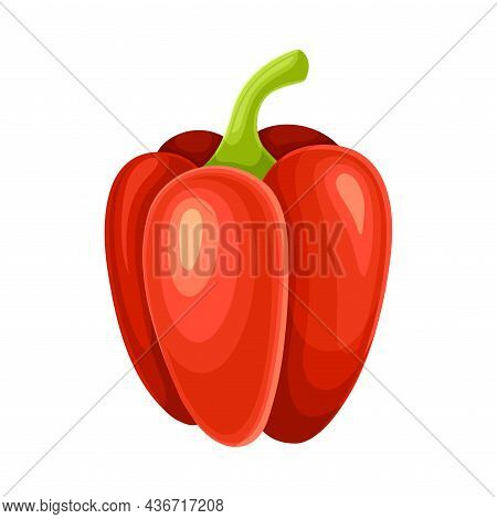 Ripe Red Bell Pepper Vegetable As Healthy Raw Food And Garden Cultivar Closeup Vector Illustration