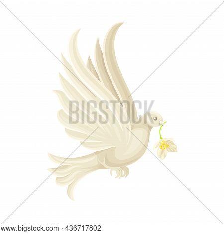White Wedding Dove Flying With Flower In Beak Closeup Vector Illustration