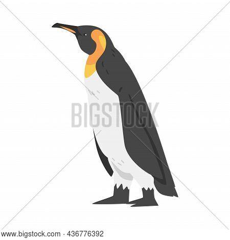 Emperor Penguin As Aquatic Flightless Bird With Flippers For Swimming In Standing Pose Vector Illust