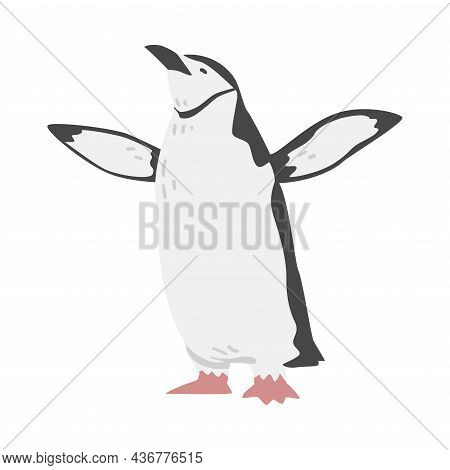 Chinstrap Penguin As Aquatic Flightless Bird With Flippers For Swimming In Standing Pose Vector Illu