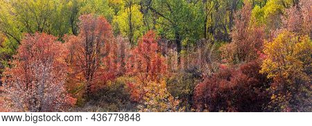 Panoramic view of colorful trees in woodlands of Utah during autumn time