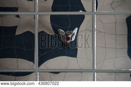The Photographer Takes Pictures Of Himself On The Mirrored Ceiling.