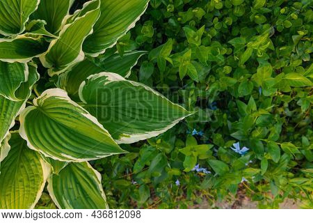 Green Color Flora Background Photography In Botanical Garden Foliage And Grass Spring Blossom Season