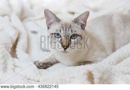 Portrait Of Tabby Cat Relaxing On Bed. Cozy Home And Relax Concept. Morning Bedtime