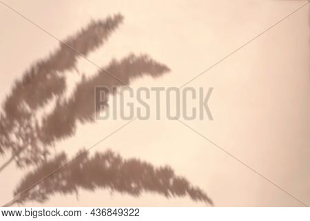Creative Copyspace With Pampas Grass Shadows On A Soft Beige Wall. Top View Of Dry Flowers Shadows O