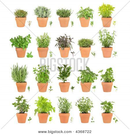 Twenty Herbs In Pots With Leaf Sprigs