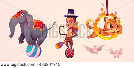 Cute Circus Animals, Elephant Standing On Ball, Monkey Juggler, Tiger Jumping Through Fire Ring And